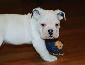 This isn't my ball...