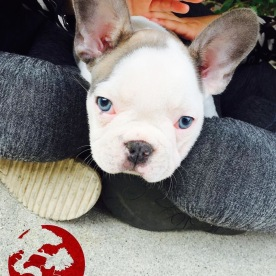 Puppy fever